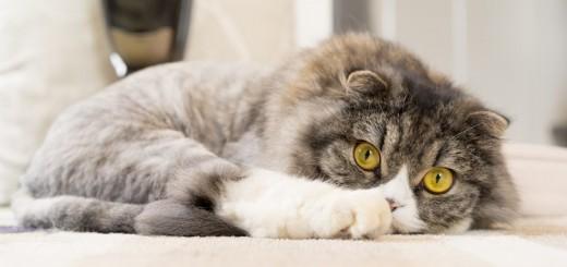 世界初!下北沢のコワーキングスペースが、運営スタッフを猫限定で募集