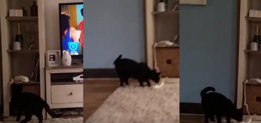 「ご主人様に代わって電話に出るニャン!」猫が奇跡の電話対応