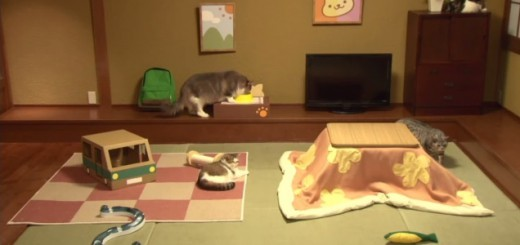 アプリゲーム「ねこあつめ」が実写化!YouTubeで生中継