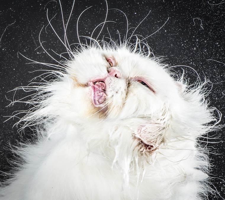 Shake-Cats-Carli-Davidson-4