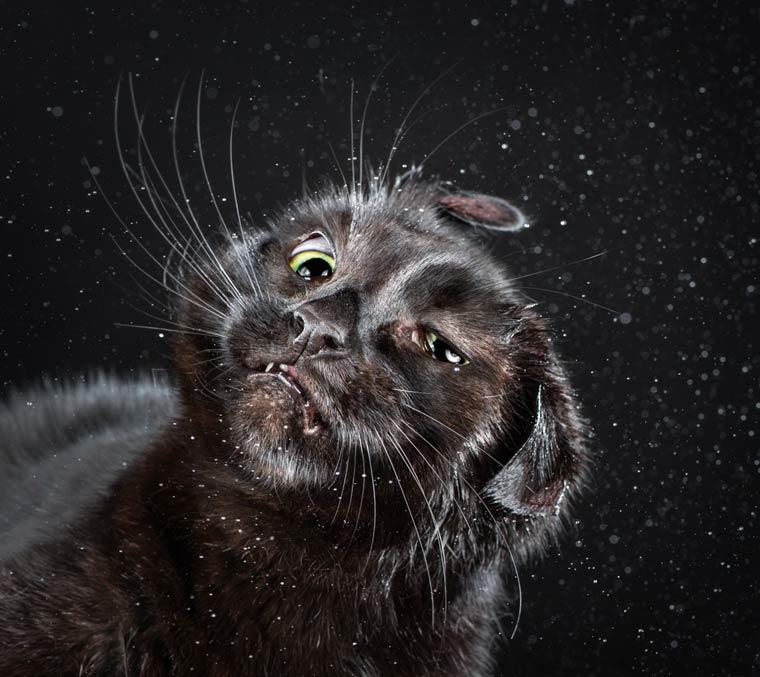 Shake-Cats-Carli-Davidson-9