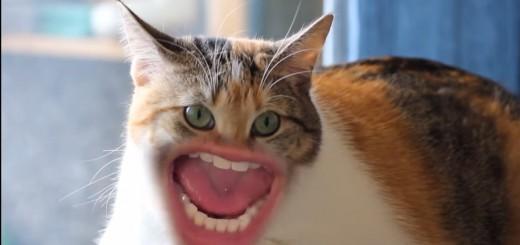 ネコの口元だけが人間のオッサン…狂気に満ちたビデオが公開