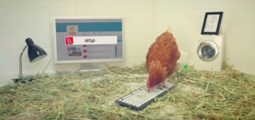 【新手のブラック企業】鶏肉食品の会社が鶏にTwitterの運用を任す