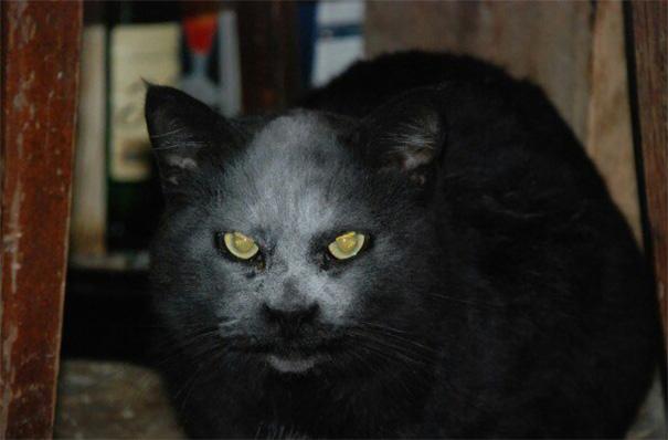 demon-cat-kitchen-accident-1