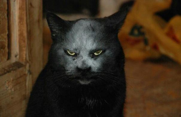 demon-cat-kitchen-accident-2