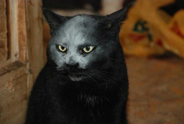 demon-cat-kitchen-accident-3
