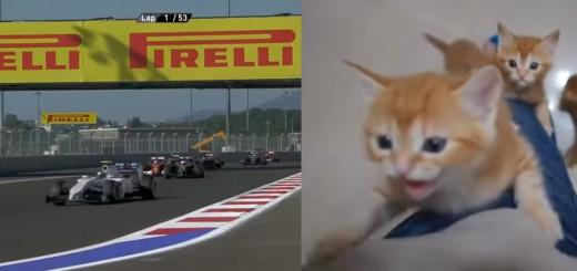 F1のレース音を子猫の鳴き声に挿げ替えると…脱力感で満載になる