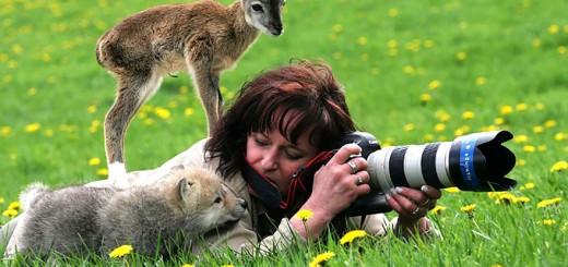自然写真家が魅力的な職業だと、一瞬で気が付ける光景まとめ