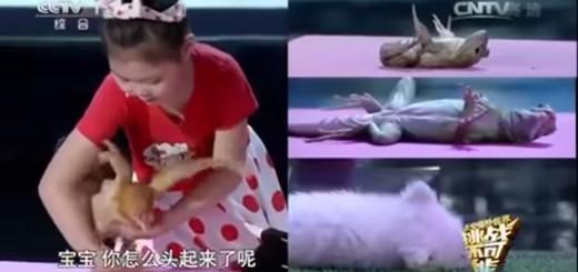あらゆる生物が撫でられると数秒で寝落ち…神の手を持つ少女が中国に現る