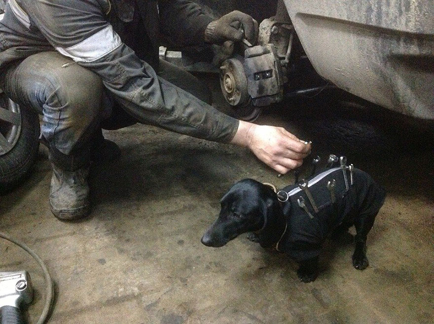 tool-dog-dachshund-suit-auto-mechanic-211
