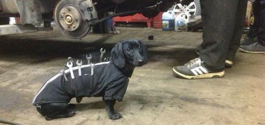 飼い主の役に立ちたいワン!工具を背負って自動車修理に臨む犬現る