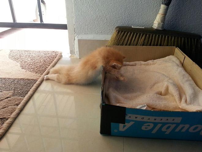 comfy-kitten
