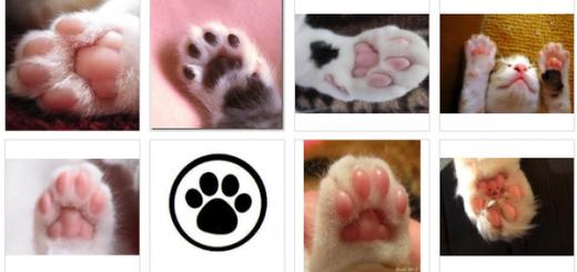 2月9日は「肉球の日」!Twitterで愛猫の肉球を公開する人が続出
