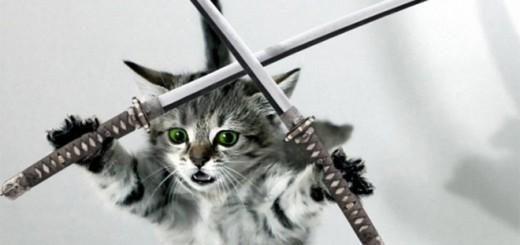 猫の写真に刀を合成すると…強そうな忍者へ変身することが判明