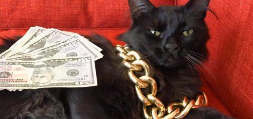 ネコが札束抱えてドヤ顔!愛猫をギャングスターに変身させたおバカ写真まとめ