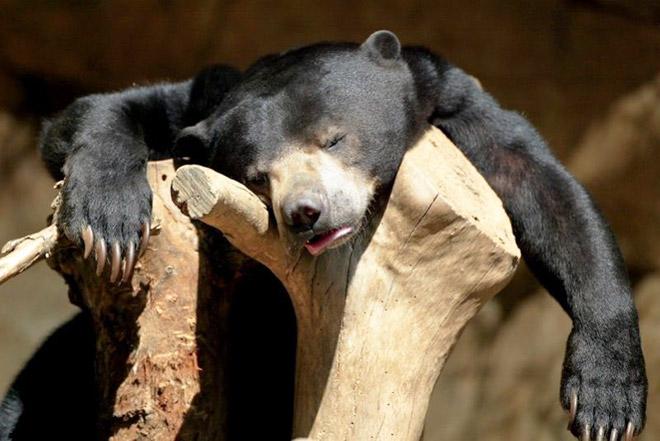 hangover6