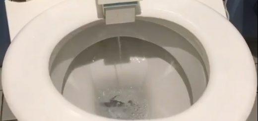 【必見】便座が回転!衝撃的な洗浄方法のトイレをドイツで発見