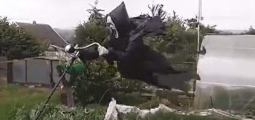 出くわすとガチで怖い!「鳥より人間がビビる」レベルのカカシ