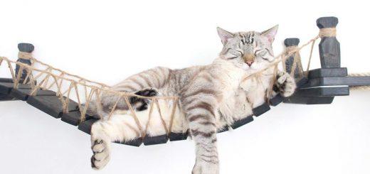 猫にとってはハンモック!?壁掛けの猫用つり橋が可愛い