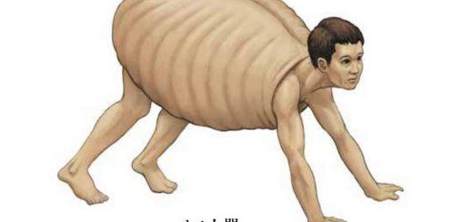 人間の体で無理やり他動物の骨格を描く!図鑑『カメの甲羅はあばら骨』がキモいけど面白い