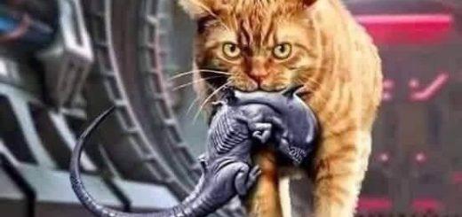 ネコ様は最強!『すぐ終わるエイリアン』架空ポスタービジュアルが映画ファンに人気